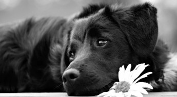 beautiful-black-dog